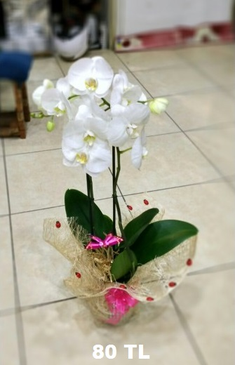 Beyaz-orkide2-li-isparta