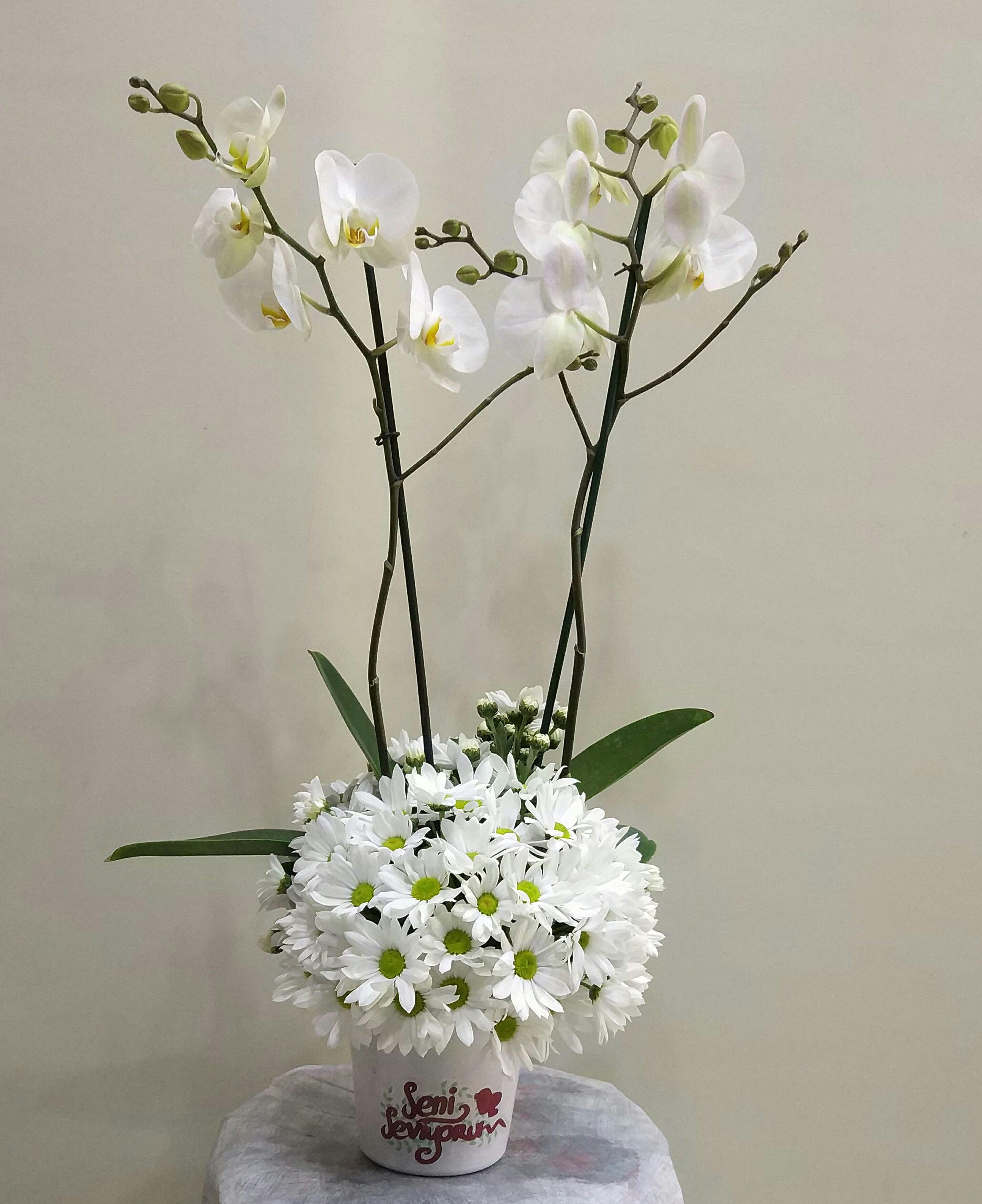 seramik vazoda orkide ve papatya